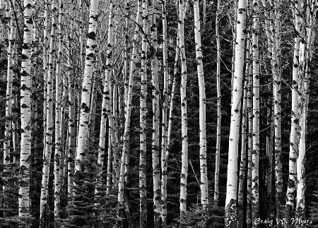 Banff Woods