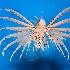 2Volitan Lionfish - ID: 12315673 © Carol Eade