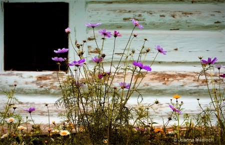 rustic frontyard