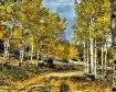 Aspen lane