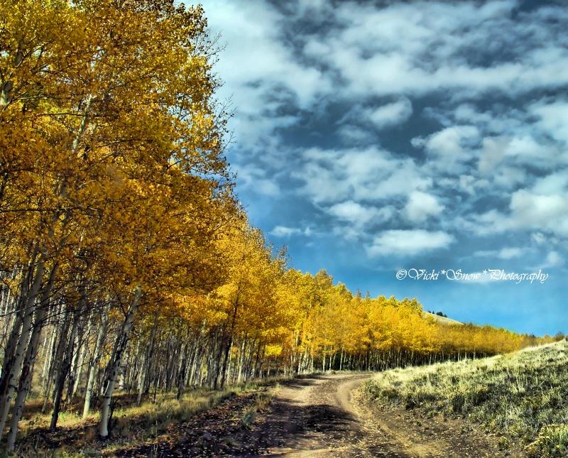 Follow the Yellow Tree Road