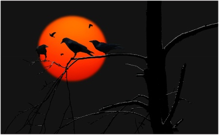 Crows...