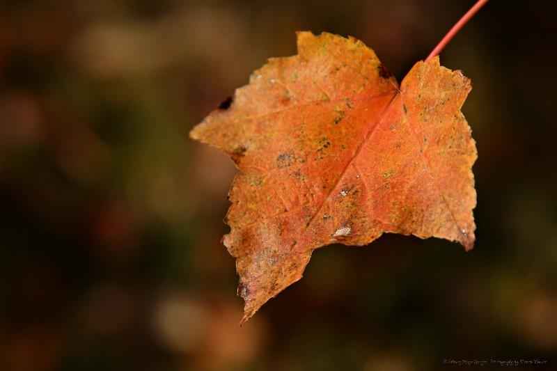 ~Lovely Leaf~