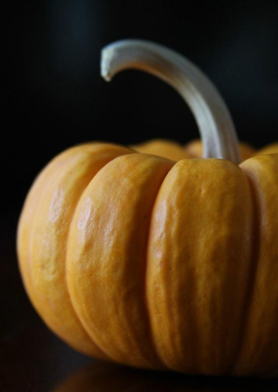 Pumpkin Curves