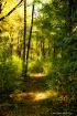 Glowing trail