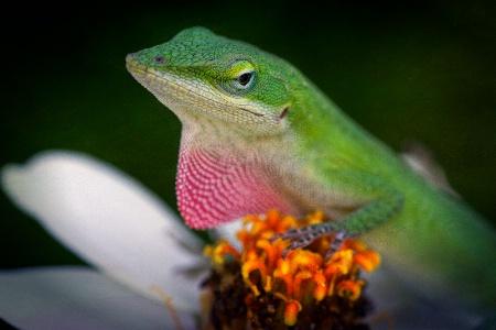 Lizardly
