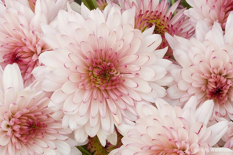 Flower Power - ID: 12371631 © Laura Wald