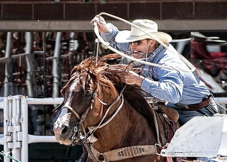 Steer Roping Rider