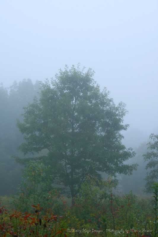 ~One Foggy Morning~