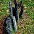 © Janice  M. LeCocq PhotoID # 12395279: Tombstones