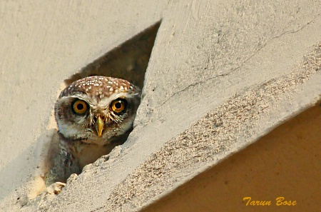 Keeping watch.