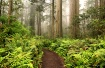 Redwood Forest,  ...