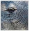 Rhino Tears