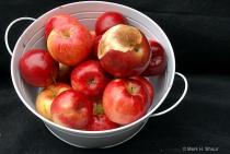 One Rotten Apple Spoils...