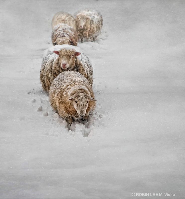 Frozen Fleece
