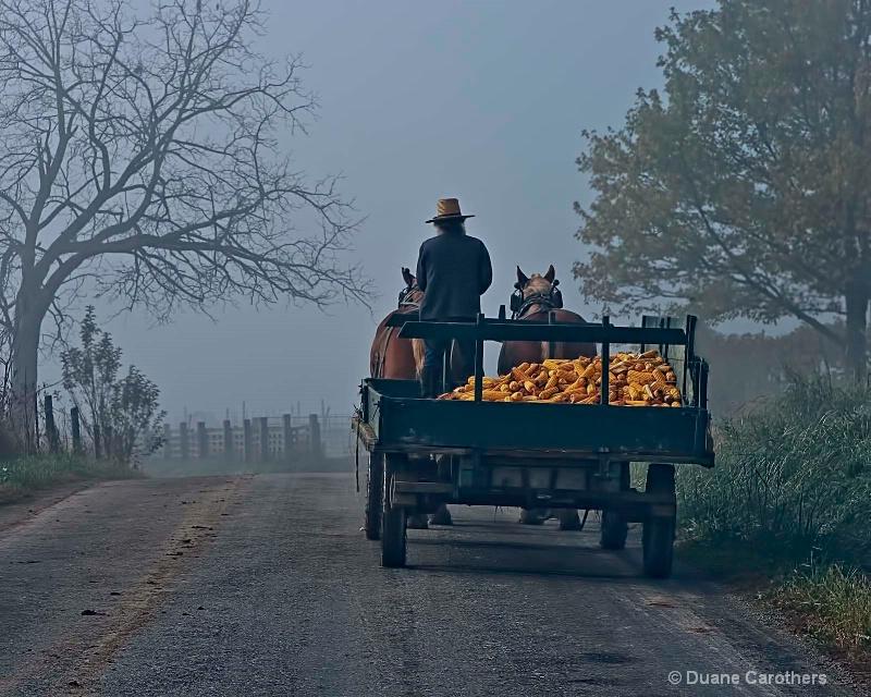 Foggy  Harvest