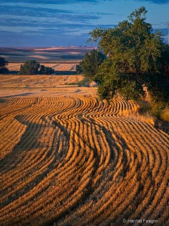 harvest pattern