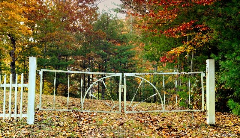 Gated Woods - ID: 12442936 © Carol Eade
