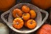 Pumpkin still lif...