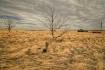 The Prairies.