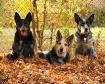 Pups in Fall
