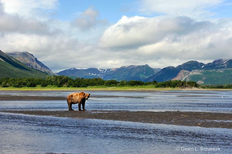 Bear Country - ID: 12471095 © Dawn Schwack