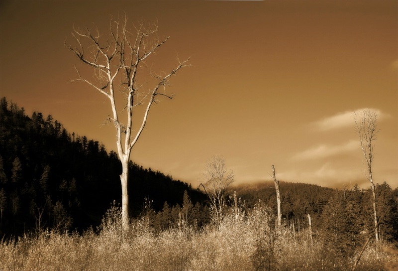Sepia View - ID: 12472078 © Kelly Pape