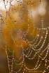 Web with Dew Drop...