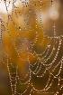 Web with Dew Drop...