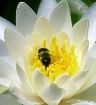 Pollination in pr...