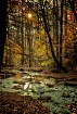 Forest Cathedral ...
