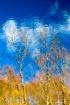 Cloud Trees - Pon...