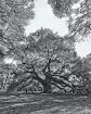 Angel Oak (John&#...
