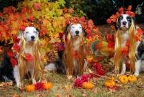 Thanksgiving Portraits