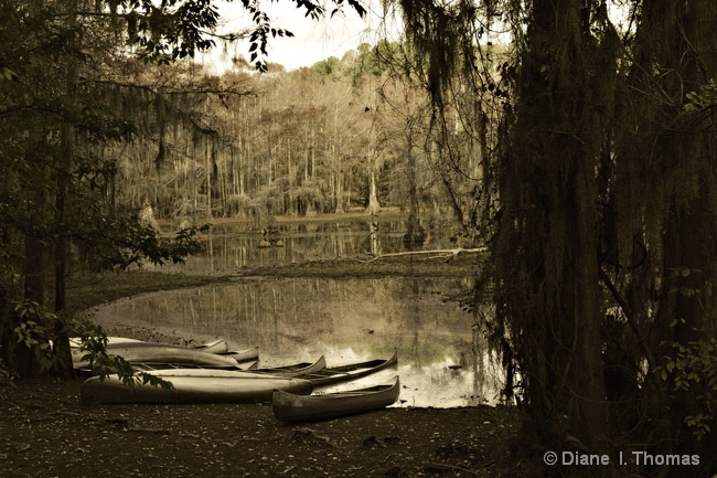 Afternoon Caddo Lake