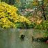 © Gerald L. Tomanek PhotoID # 12535965: Moss Temple (Saiho-ji) Garden with Boat