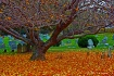 autumn graveyard ...
