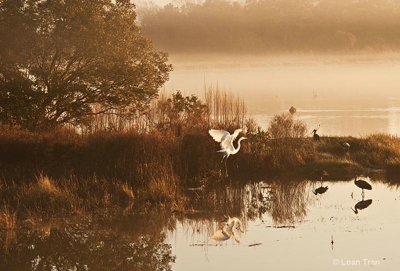 Egret at dawn - ID: 12551103 © Loan Tran