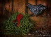 The Holiday Hen