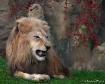Fearsome Beauty