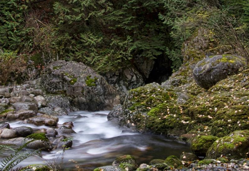 Lynn Canyon  - ID: 12572552 © Liandra Barry