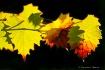 Autumn moment