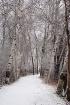 'Snowy Stroll...