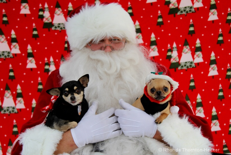 All Puppies Want For Christmas......