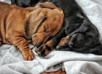 Brotherly love......