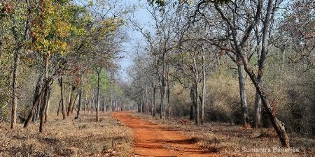 panograph  tadoba jungle tracks