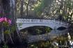 Bridge at Magnoli...