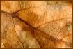 Leaf Pattens