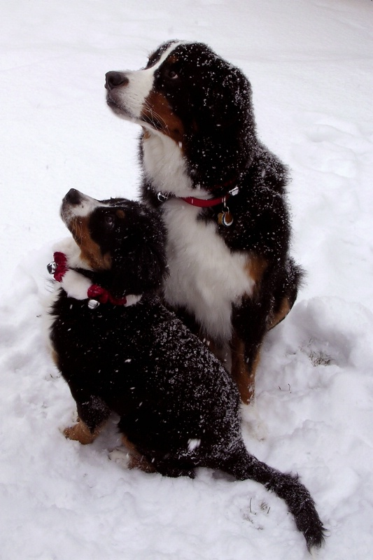 Brinkley and Lucy in snow