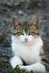 Regal Kitty